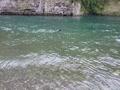 熊野川で泳いだよ~③
